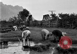 Image of rice paddies Japan, 1920, second 62 stock footage video 65675052988
