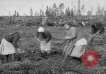 Image of Russians Archangel Russia, 1918, second 10 stock footage video 65675053040