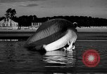 Image of dead beached whale United States USA, 1936, second 36 stock footage video 65675053140