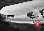 Image of dead beached whale United States USA, 1936, second 55 stock footage video 65675053140