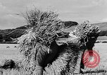 Image of Women Land Army United Kingdom, 1939, second 6 stock footage video 65675053192