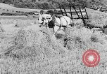 Image of Women Land Army United Kingdom, 1939, second 30 stock footage video 65675053192