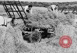 Image of Women Land Army United Kingdom, 1939, second 38 stock footage video 65675053192