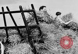 Image of Women Land Army United Kingdom, 1939, second 56 stock footage video 65675053192