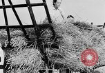 Image of Women Land Army United Kingdom, 1939, second 58 stock footage video 65675053192