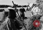 Image of Women Land Army United Kingdom, 1939, second 61 stock footage video 65675053192