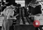 Image of Women Land Army United Kingdom, 1939, second 1 stock footage video 65675053193