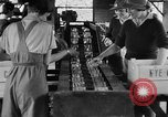 Image of Women Land Army United Kingdom, 1939, second 7 stock footage video 65675053193