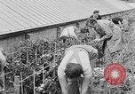 Image of Women Land Army United Kingdom, 1939, second 28 stock footage video 65675053193