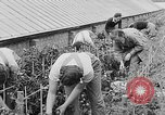 Image of Women Land Army United Kingdom, 1939, second 29 stock footage video 65675053193