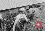 Image of Women Land Army United Kingdom, 1939, second 31 stock footage video 65675053193