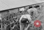 Image of Women Land Army United Kingdom, 1939, second 32 stock footage video 65675053193
