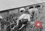 Image of Women Land Army United Kingdom, 1939, second 33 stock footage video 65675053193