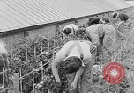 Image of Women Land Army United Kingdom, 1939, second 34 stock footage video 65675053193