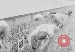 Image of Women Land Army United Kingdom, 1939, second 35 stock footage video 65675053193