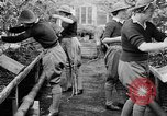 Image of Women Land Army United Kingdom, 1939, second 45 stock footage video 65675053193