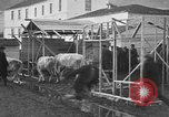 Image of Armenian refugees Constantinople Turkey, 1920, second 29 stock footage video 65675053220