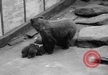 Image of triplet bear cubs Washington DC USA, 1936, second 11 stock footage video 65675053232