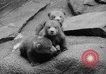Image of triplet bear cubs Washington DC USA, 1936, second 19 stock footage video 65675053232