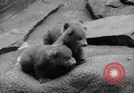 Image of triplet bear cubs Washington DC USA, 1936, second 21 stock footage video 65675053232