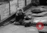 Image of triplet bear cubs Washington DC USA, 1936, second 22 stock footage video 65675053232