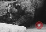 Image of triplet bear cubs Washington DC USA, 1936, second 37 stock footage video 65675053232