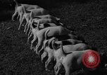 Image of English Fox Terrier pups Fort McPherson Georgia USA, 1940, second 4 stock footage video 65675053251