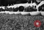 Image of English Fox Terrier pups Fort McPherson Georgia USA, 1940, second 13 stock footage video 65675053251