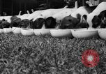 Image of English Fox Terrier pups Fort McPherson Georgia USA, 1940, second 14 stock footage video 65675053251