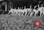 Image of English Fox Terrier pups Fort McPherson Georgia USA, 1940, second 20 stock footage video 65675053251