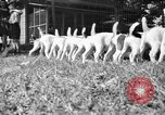 Image of English Fox Terrier pups Fort McPherson Georgia USA, 1940, second 21 stock footage video 65675053251
