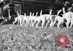 Image of English Fox Terrier pups Fort McPherson Georgia USA, 1940, second 22 stock footage video 65675053251