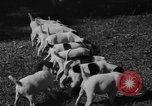 Image of English Fox Terrier pups Fort McPherson Georgia USA, 1940, second 23 stock footage video 65675053251