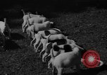 Image of English Fox Terrier pups Fort McPherson Georgia USA, 1940, second 26 stock footage video 65675053251