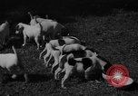 Image of English Fox Terrier pups Fort McPherson Georgia USA, 1940, second 27 stock footage video 65675053251