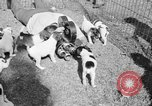 Image of English Fox Terrier pups Fort McPherson Georgia USA, 1940, second 38 stock footage video 65675053251