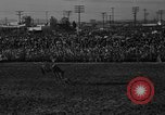 Image of bucking horses Los Angeles California USA, 1940, second 10 stock footage video 65675053253