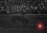 Image of bucking horses Los Angeles California USA, 1940, second 28 stock footage video 65675053253