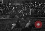 Image of bucking horses Los Angeles California USA, 1940, second 40 stock footage video 65675053253
