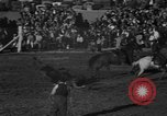 Image of bucking horses Los Angeles California USA, 1940, second 44 stock footage video 65675053253