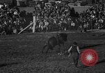 Image of bucking horses Los Angeles California USA, 1940, second 46 stock footage video 65675053253