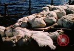 Image of Navy burial at sea Pacific Ocean, 1944, second 8 stock footage video 65675053282