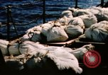 Image of Navy burial at sea Pacific Ocean, 1944, second 10 stock footage video 65675053282
