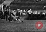 Image of Rodeo event Los Angeles California USA, 1945, second 28 stock footage video 65675053384