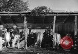 Image of texas ranch lifestyle mid 1940s Kerrville Texas USA, 1945, second 28 stock footage video 65675053501
