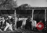 Image of texas ranch lifestyle mid 1940s Kerrville Texas USA, 1945, second 29 stock footage video 65675053501