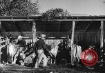 Image of texas ranch lifestyle mid 1940s Kerrville Texas USA, 1945, second 30 stock footage video 65675053501