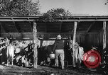 Image of texas ranch lifestyle mid 1940s Kerrville Texas USA, 1945, second 31 stock footage video 65675053501