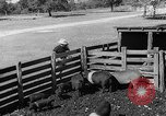Image of texas ranch lifestyle mid 1940s Kerrville Texas USA, 1945, second 58 stock footage video 65675053501