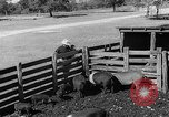 Image of texas ranch lifestyle mid 1940s Kerrville Texas USA, 1945, second 59 stock footage video 65675053501